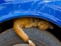 Автомобилисты! Внимание - кошки!
